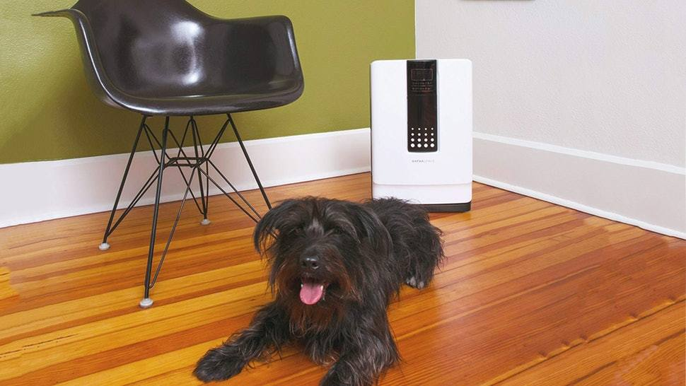 black furry dog with an air purifier for pets behind him
